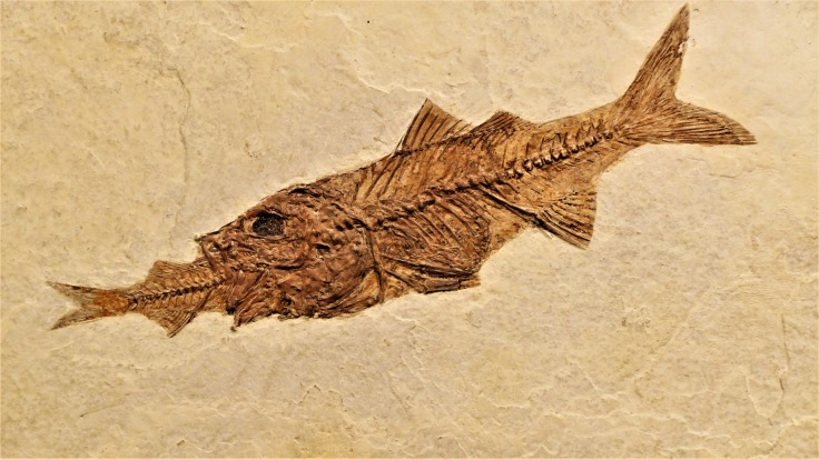 fish-2856331_1920